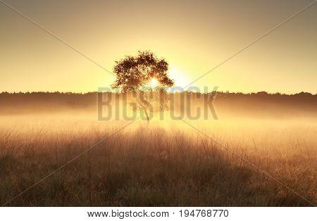 golden misty sunrise behind tree in summer