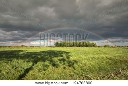 rainbow over green meadow with tree shadow