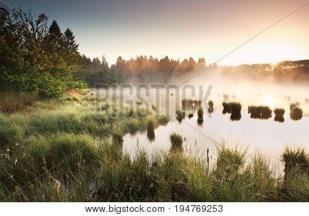 serene misty summer sunrise over wild swamp