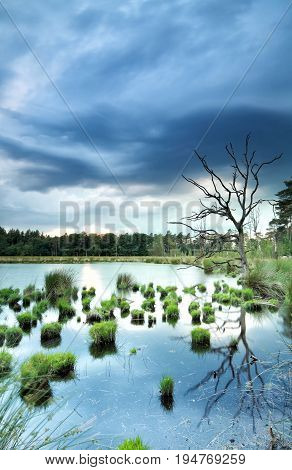 stormy weather over wild swamp with old tree