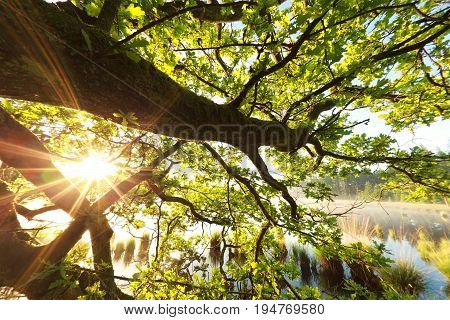 sunshine through oak tree leaves by lake