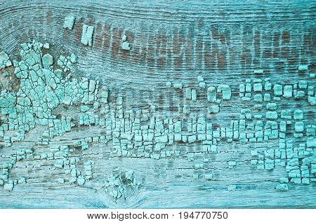 Peeling paint of turquoise color on the wooden texture background. Gringe surface of turquiose peeling paint on the wooden old background. Wooden planks with peeling paint on them