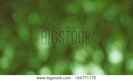 Green bokeh background, defocus beneath a tree under sunlight in summer.