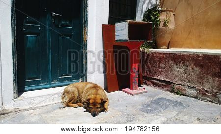 A stray dog lies on the street next to the front door
