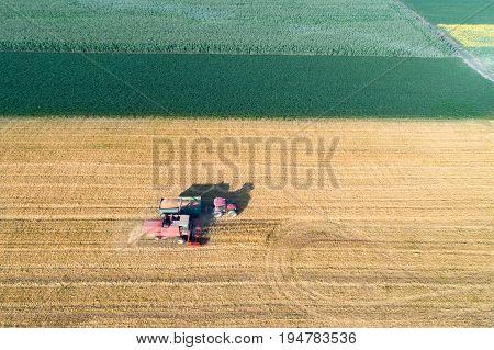 Wheat Harvest In Summertime