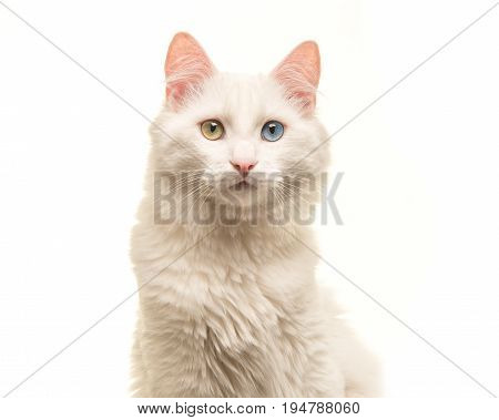 White turkish angora cat portrait looking at the camera isolated on a white background
