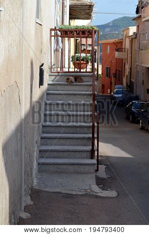 Dog Sitting At Staircase In Italy To Defend His Home