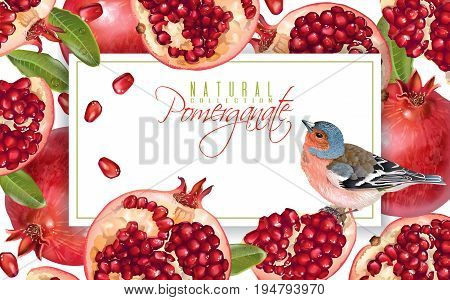 Vector horizontal banner with pomegranate fruits and bird on white background. Design for cosmetics, spa, pomegranate juice, health care products, perfume. Can be used as menu or summer background