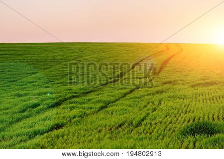 Morning Landscape With Green Field, Traces Of Tractor In Sun Rays
