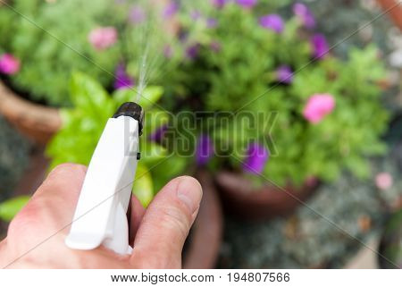 Watering Plants In The Garden With A Spray