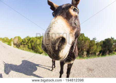 funny donkey looking at the camera, Cyprus, Karpaz National Park Wild Donkey Protection Area