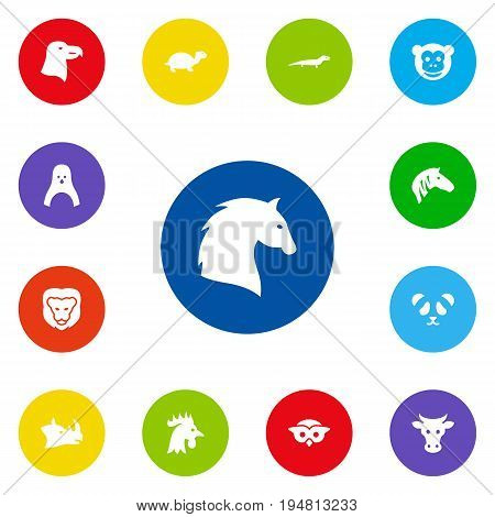 Set Of 13 Animal Icons Set.Collection Of Steed, Bear, Horse And Other Elements.