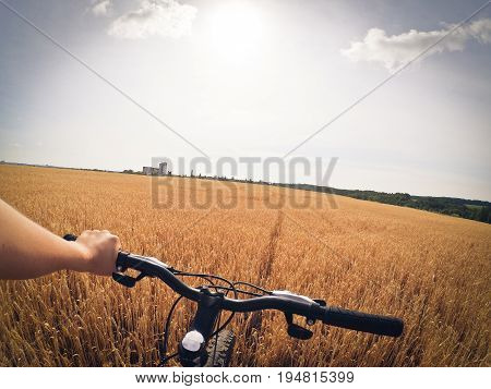 A man holds a wheel with one hand standing in a field of wheat in a hot summer sunny day. Action camera go pro