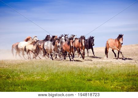 The herd of horses quickly rushes through the steppe.