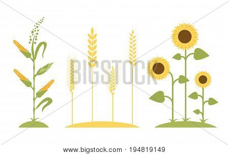 Wheat field. Sunflower icon cartoon. Corn tree - vector illustration. Flat design. Agricultural symbols. Concept for organic products label, harvest and farming, grain, bakery, healthy food.