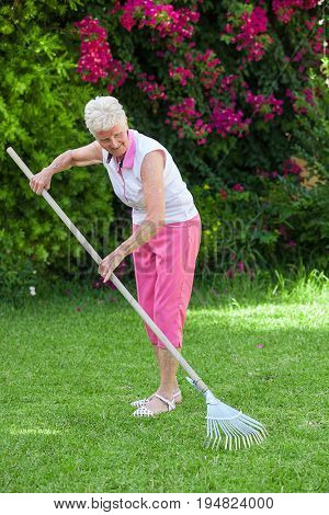 senior retired woman gardening raking lawn