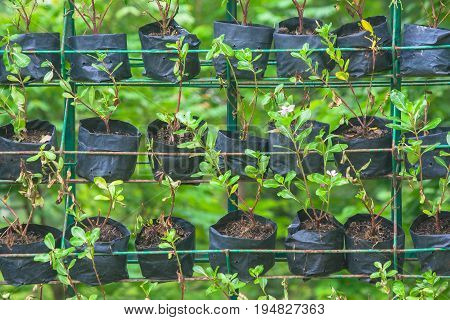 Vertical and horizontal row of plant in black bag at public park.