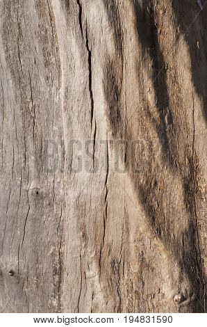 Bark tree nature closeup concept - bark of wood as a background