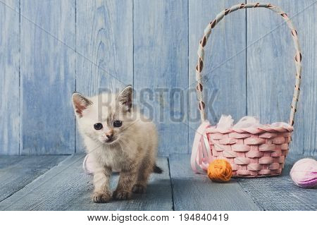 White kitten with wool ball and straw basket play at blue wood background. Small funny cat.