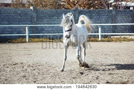 Single one horse playing in captivity. Horizontal photo