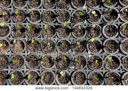 Greenhouse To Reforestation