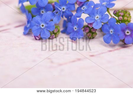 Blue forget me not flowers on the top right corner of the image on a pastel pink wooden background with space for text