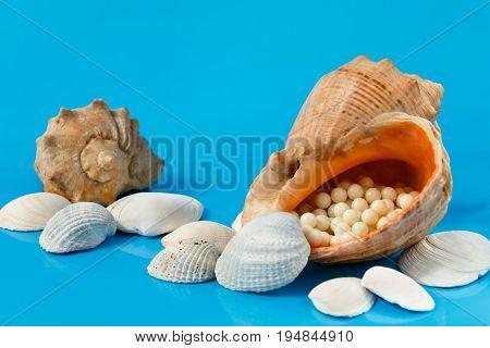several colored aquarium seashells on blue background