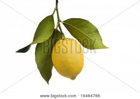 Lemon with leaves isolated on white