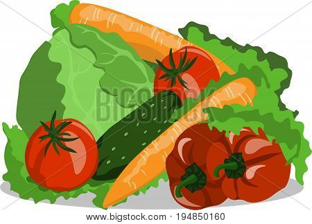 Vector image vegetables still life cucumber tomato carrots cabbage pepper vegan
