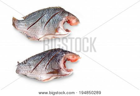 Two Nile Tilapia raw fish in Thailand isolate on white background and clipping paths Has copy space.