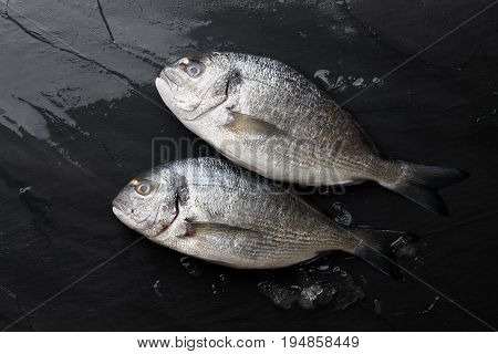 Fresh dorado or gilthead bream on black stone background with ice