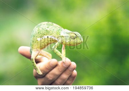 Man holding chameleon close-up of hand