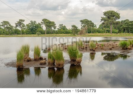 Clumps of grass reflected in the mirror smooth water surface of a Dutch fen with a very low water level due to prolonged drought.