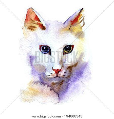 Angora cat portrait watercolor painting on white