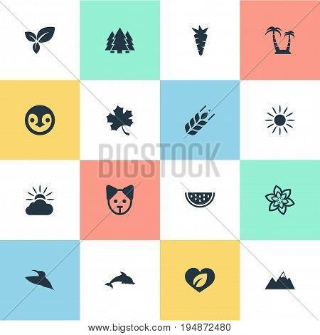 Vector Illustration Set Of Simple Geo Icons. Elements Diver, Pinnacle, Jungle And Other Synonyms Wing, Vegetable And Corn.