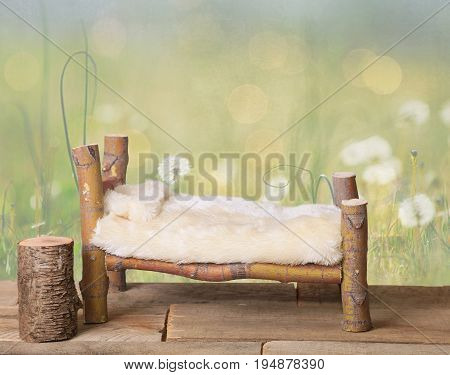 bed studio digital prop made from Japanese Maple tree branches with a dandelion green meadow nature background.