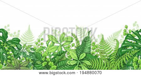 Hand drawn branches and leaves of tropical plants. Vivid line horizontal floral pattern. Green seamless border on white background. Vector sketch.