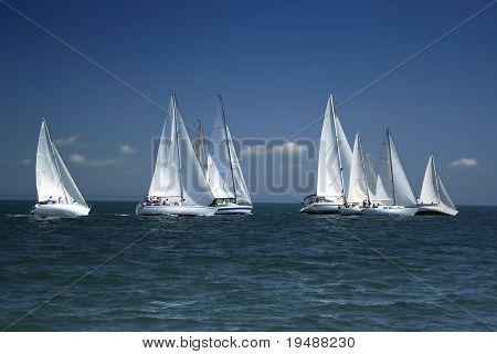 Das große Rennen begann! Start der Segel-Regatta. Die Segelyachten konkurrieren in der Geschwindigkeit.