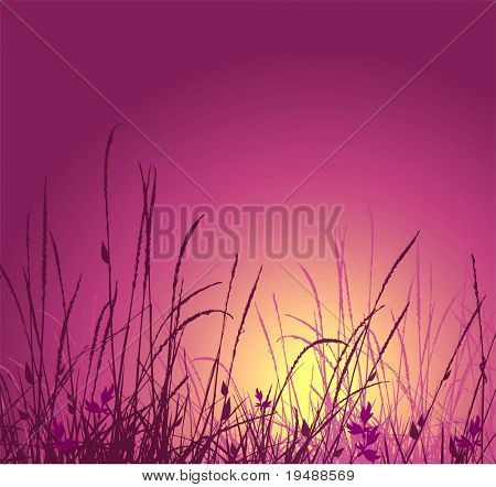 grass vector silhouette and sunset. Ideally for your use in design