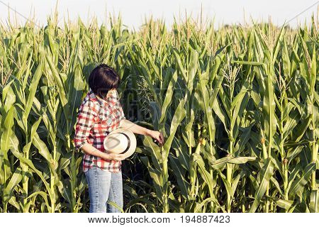 Woman  Agronomist Examines The Quality Of Corn