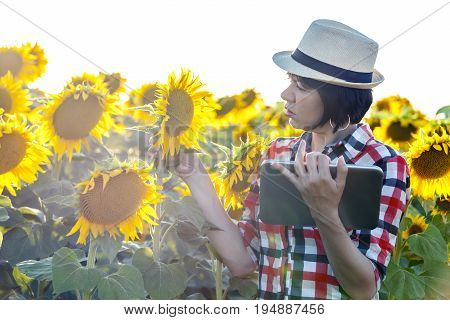 Woman Agronomist With A Hat Uses A Tablet To Record Estimates Of The Quality And Yield Of Sunflower