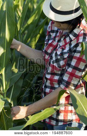 Woman Farmer In A Field With Corn