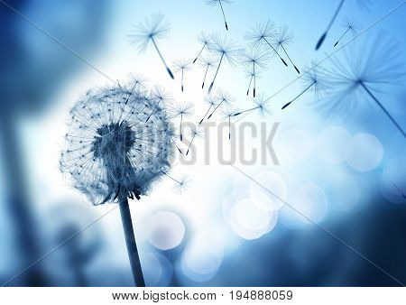 Dandelion seeds blowing in the wind across a cool field background conceptual image meaning change growth movement and direction.