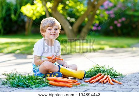 Funny blond little kid boy with carrots in domestic garden. Child gardening and eating outdoors. Healthy organic vegetables for kids