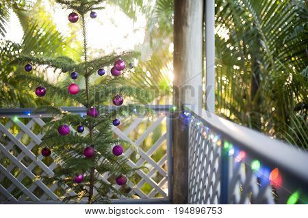 Fresh natural evergreen Christmas tree growing in a pot on an outdoor deck or patio decorated with colorful Xmas baubles