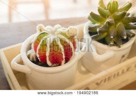 Small cactus pots on wooden table stock photo
