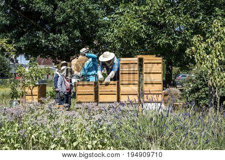 05.07.2017 - Koblenz Germany - Beekeeper teaching Kids in hive adds frames, watching bees. Bees on honeycombs. Frames of a bee hive