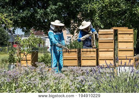 Beekeeper working in a hive adds frames, watching bees. Bees on honeycombs. Frames of a bee hive. Apiary concept