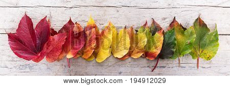 Autumn Leaves In A Row
