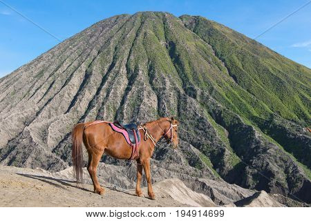 Horse On Mount Bromo Volcano (gunung Bromo) At Bromo Tengger Semeru National Park, East Java, Indone